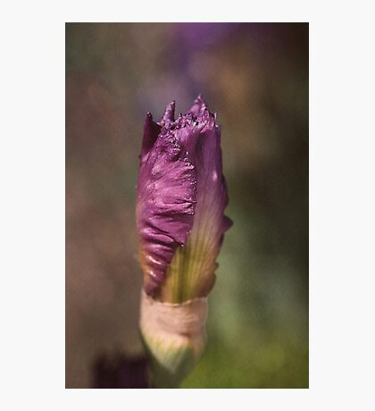 Dreaming Iris Photographic Print