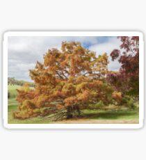 Swamp Cypress #4 Sticker