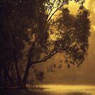 Golden Morning By Lorraine McCarthy by Lozzar Landscape