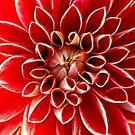 Rote Nova von C. C. Barrett