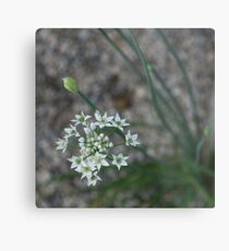 Calming Grays and White Stars Metal Print