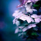 Passionate Hydrangea by Sue Nueckel