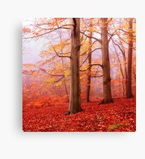 Burnham Beeches. November Canvas Print