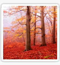 Burnham Beeches. November Sticker
