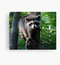 I ♥ Tree Climbing Canvas Print