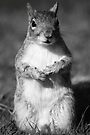 50 Shades Of Grey......... Squirrel by CBoyle