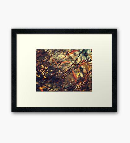 Happenings Framed Print