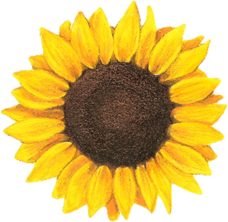 Sunflower Stickers Redbubble