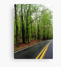 Green Forrest Road Canvas Print