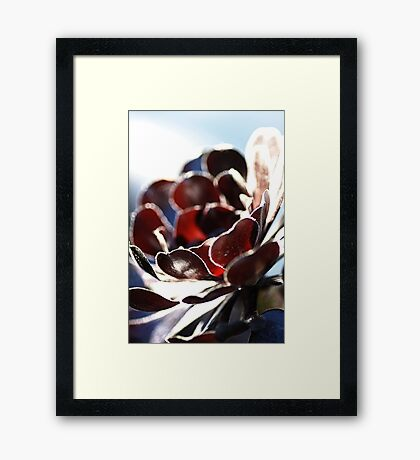 Succulent  in the Spotlight Framed Print