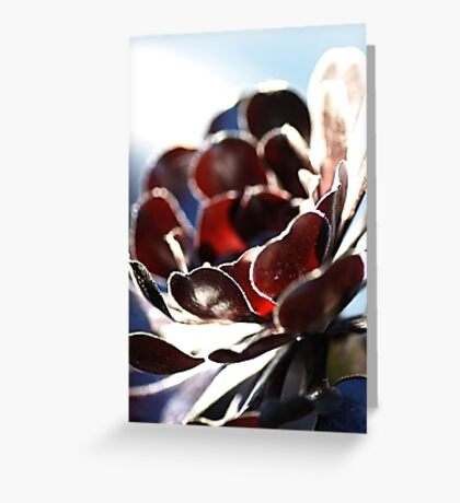 Succulent  in the Spotlight Greeting Card
