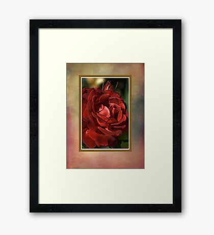 Elegant Rose Framed Print