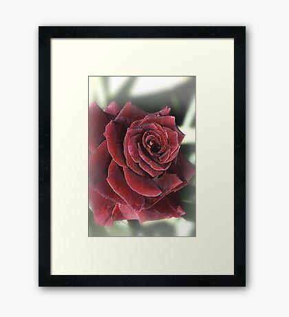 Dreaming On The Rose Framed Print