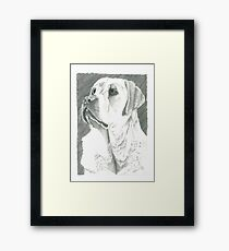Charlie, Autism Trained Assistant Framed Print
