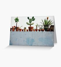 Row of Cacti and Succulents  Greeting Card
