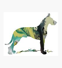 Great Dane  Photographic Print