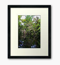 Mirror Image Tree on river Framed Print