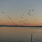 Seagulls flying in the sky at dusk.  by naturematters