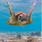 Joyful turtle by Kara Murphy