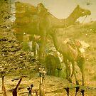 Camel Reflections by Valerie Rosen