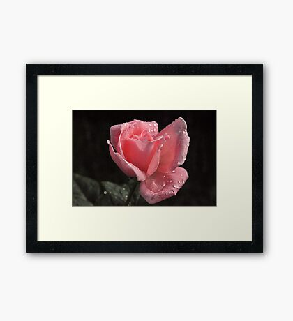 There's something special about this one... Framed Print