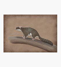 Volaticotherium antiquum - extinct gliding mammal Photographic Print