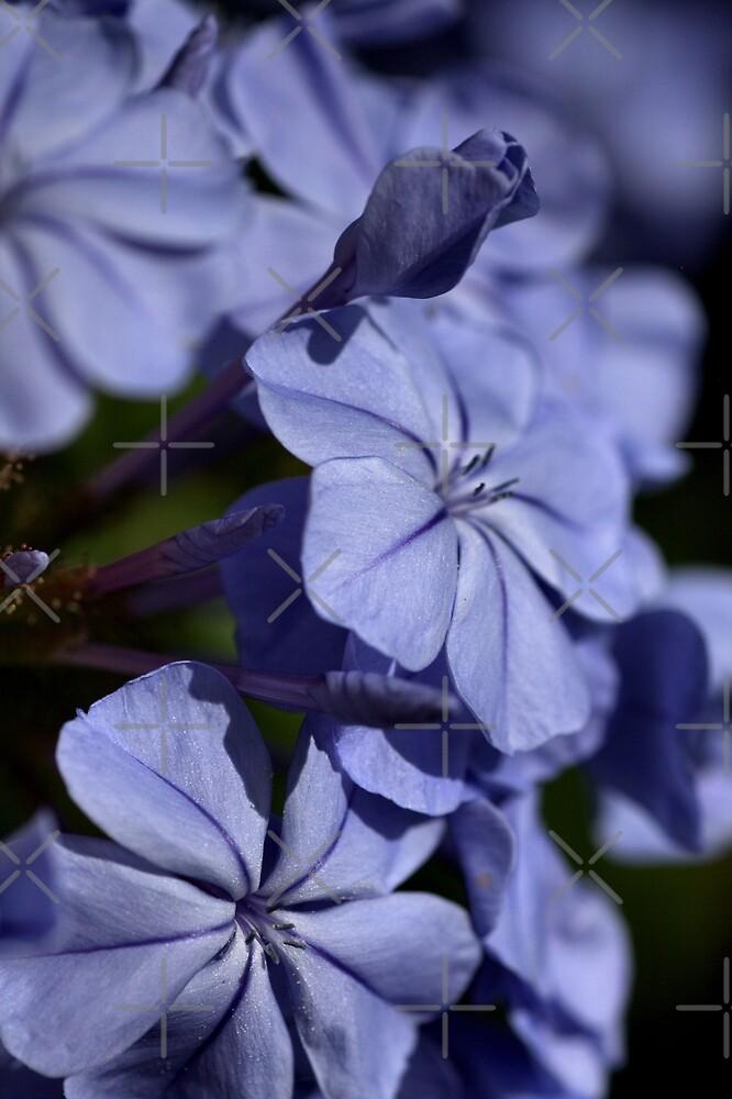 Turned Blue by Joy Watson