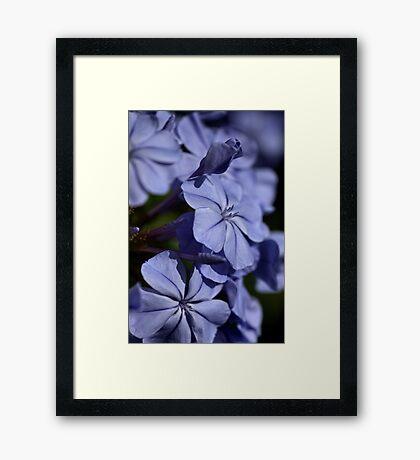 Turned Blue Framed Print