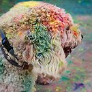 HOLI Indian Color Festival, Doggie Style! by Heather Friedman