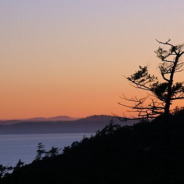 Hillside Tree Over Puget Sound by iacon
