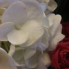 White Hydrangea & Red Roses by BC Family