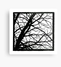 Tree Shadow Metal Print