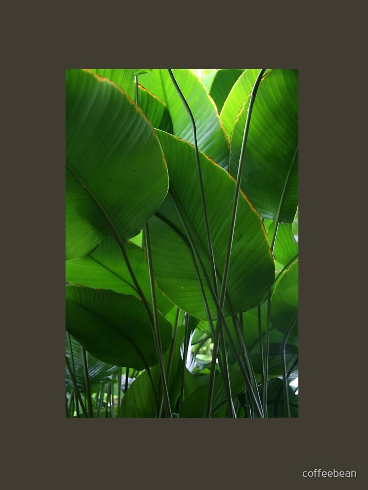 Tropisch frisch von coffeebean