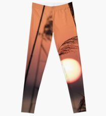 Sunset through the canes, Monte del Lago, Lago Trasimeno, Umbria, Italy Leggings