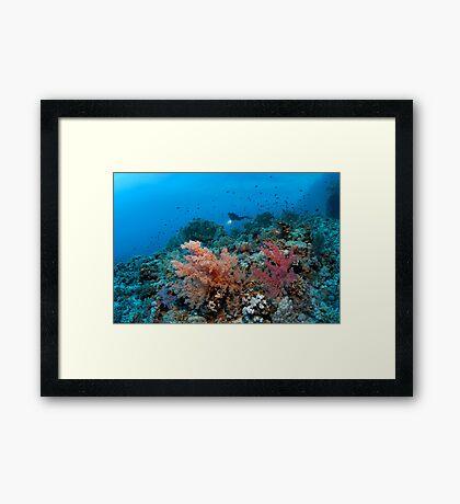Shaab Sharm Framed Print