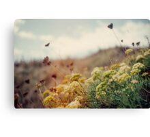 Meadow of Wildflowers Canvas Print