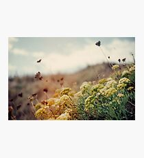 Meadow of Wildflowers Photographic Print