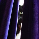 I can see you by Maryanne Lawrence