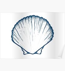 Seashell, sea shell, nature ocean aquatic underwater vector. Hand drawn marine engraving illustration on white background Poster