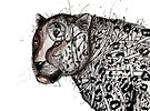 Leopard stare by Jenny Wood