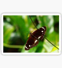 Oleander Butterfly Sticker