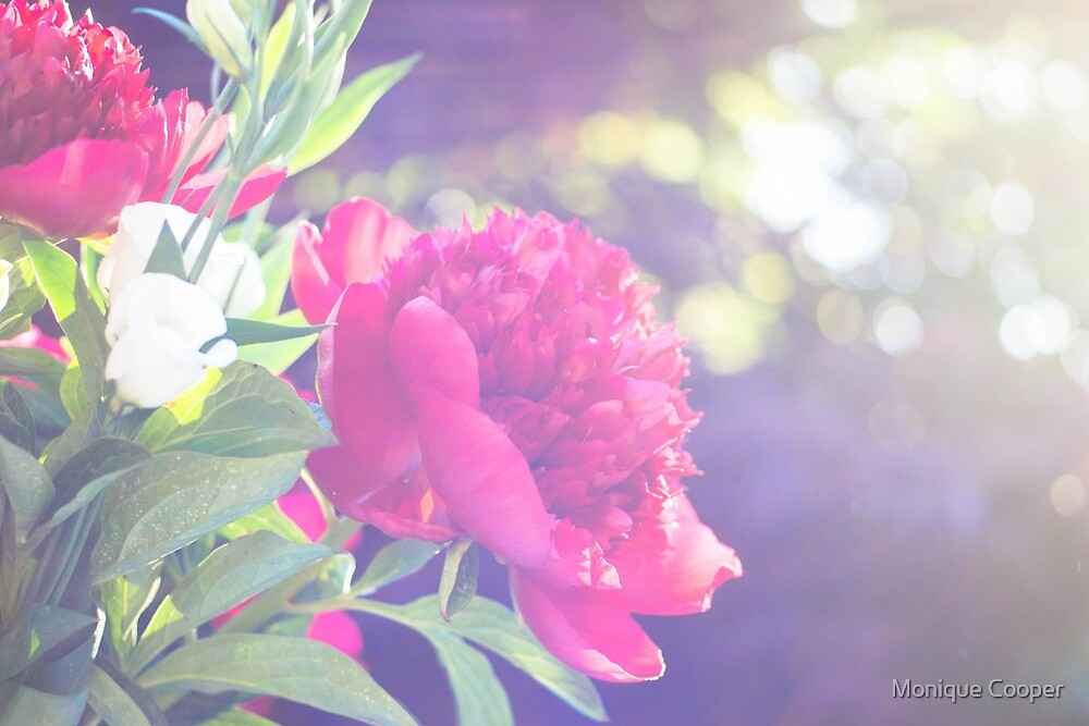 Afternoon Peony by M R Cooper