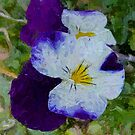 Purple Painted Pansy by Lisa Taylor