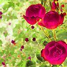 three roses by mindgoop