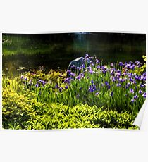On the Sunny Bank of the Pond - Enjoy Summer! Poster