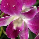 Orchid  ~ National Orchid Garden, Singapore by Lucinda Walter