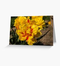Showy Sunny Yellow Tulips Greeting Card