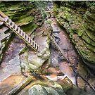 Trail Ladders in Bear Hollow by Kenneth Keifer