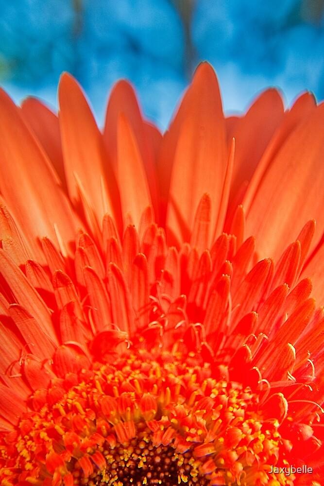 Orange Gerbera in the garden by Jaxybelle