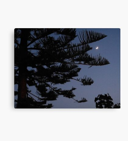 Moonlight Pine Canvas Print